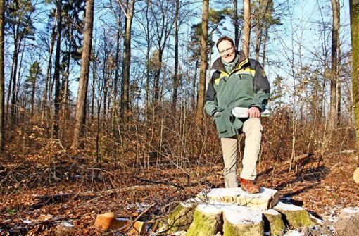 Hagen Dilling, stellvertretender Leiter Garten-, Friedhofs- und Forstamts,  zwischen Bäumchen, die von  einer gefällten Buche beschattet wurden und künftig mehr Licht zum Wachsen haben werden. Foto: Marta Popowska