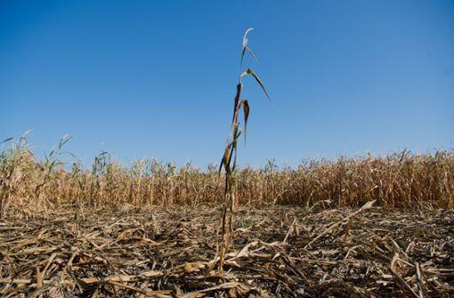 Rund 300 Landwirte aus dem Südwesten beantragen staatliche Hilfe