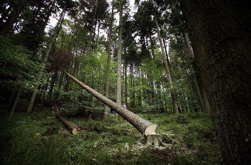 Forstdirektor wünscht sich Regen