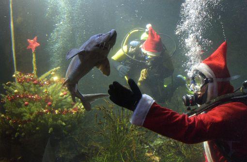 Weihnachtsdeko Aquarium.Aquarium Weihnachtsdeko Italiaansinschoonhoven