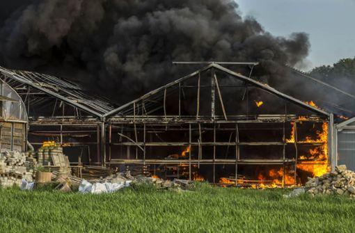 Feuer vernichtet Gärtnerei