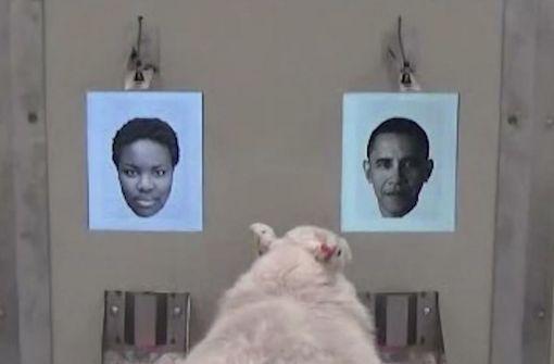 Schafe erkennen Barack Obama auf Fotos wieder