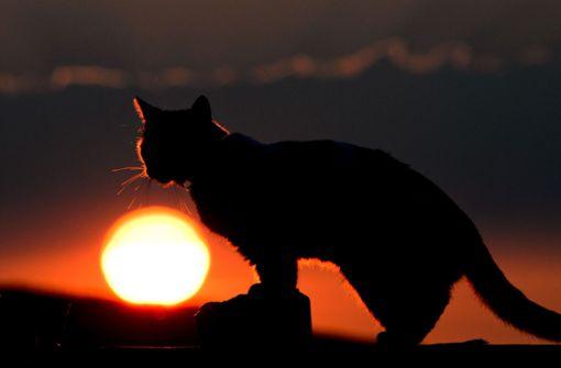 Katze gerät in Schlingenfalle