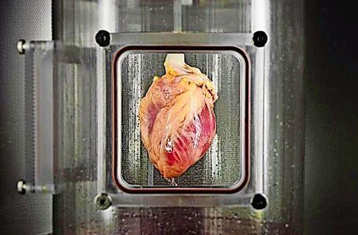 Dieses menschliche Herz entstand teilweise im Bioreaktor. Foto: Jank/Ott Lab