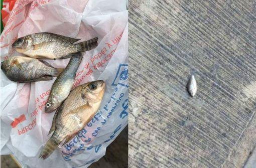 Fische fallen vom Himmel