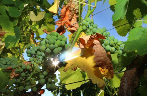 Hitze hat Auswirkungen auf Angebot und Preise von Lebensmitteln