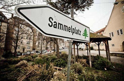 Die Abfallwirtschaft hat vergessen, dass Sammelschild am Paul-Gerhardt-Platz abzumontieren. Jetzt stapeln sich dort Dutzende von entsorgten Weihnachtsbäumen. Foto: Leif Piechowski