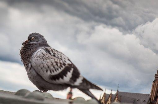 Taubenhaus soll errichtet werden