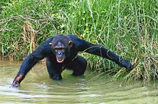 Tierische Rezepte gegen die Affenhitze