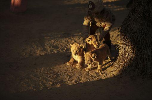 Besitzer von Gaza-Zoo will Löwenbabys verkaufen