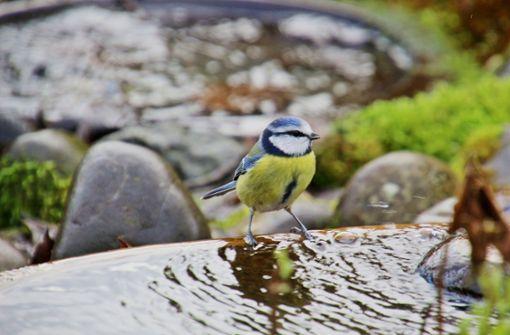 Vögel und andere Kleintiere brauchen jetzt Wassertränken