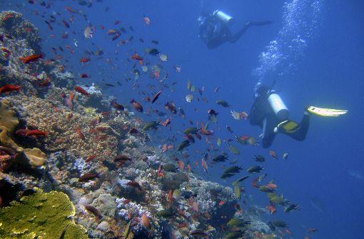 Die Korallen sterben und niemand sieht hin