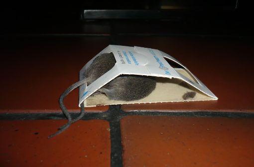 Diese hatten im vergangenen Jahr reichlich zu tun. Bei der Kontrolle entstand auch dieses Bild einer toten Maus – in einer Klebefalle für Schaben.  Foto: Stadt Stuttgart