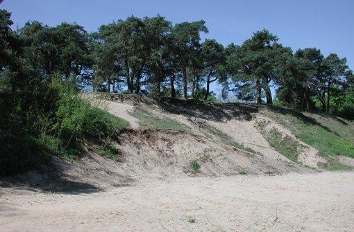 Wo Sand und Sumpf aufeinander treffen