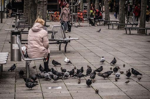 Stellen Sie sich den kniffligsten Tauben-Fragen