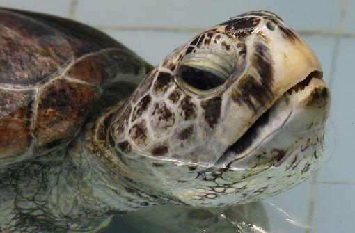 Erste Schwimmversuche nach der Münzen-Operation