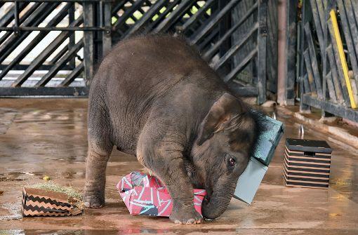 Elefantenbaby Neha feiert ersten Geburtstag
