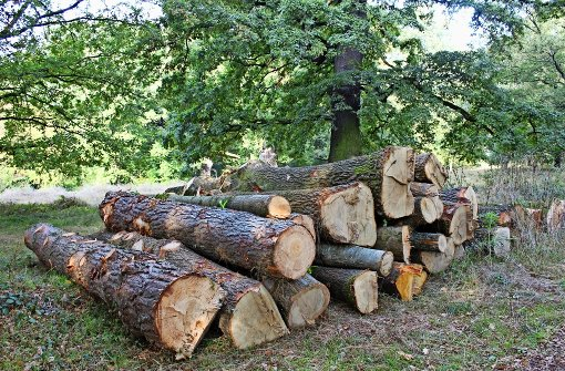 Bürger beschweren sich über eine Fällaktion im Naturschutzgebiet Eichenhain. Das Regierungspräsidium wiederum verteidigt diese Maßnahme. Foto: Tilman Baur