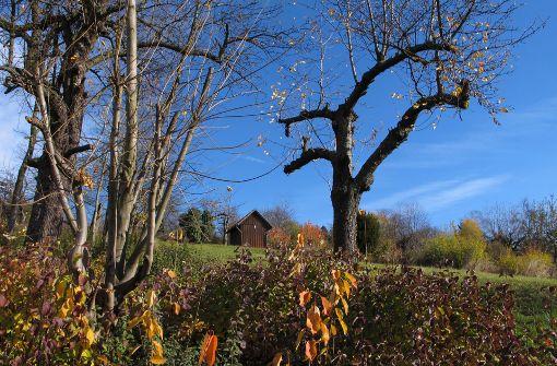 Am Wochenende zeigte sich trotz klirrender Kälte die Sonne und... Foto: Leserfotograf bdslucky48