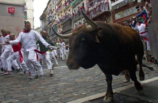 Stier nimmt drei Läufer auf die Hörner