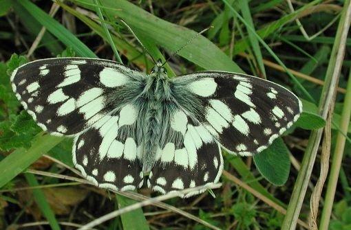 Schmetterlingsland: Viele Blu00fcten im Garten - viele ...
