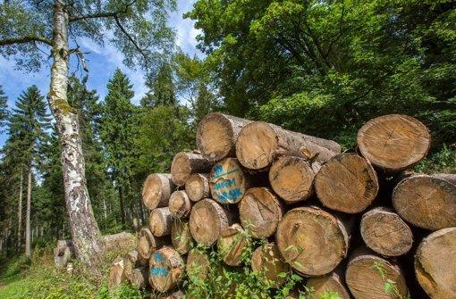 Bisher erledigen die staatlichen Förster den Holzverkauf von Privatwaldbesitzern mit – doch das dürfen sie künftig nicht mehr Foto: dpa-Zentralbild
