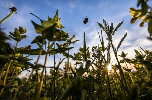 82 Prozent weniger Insekten im Sommer