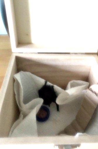 Sie wird auf den Namen Egon getauft und zieht vorübergehend in eine ausgepolsterte Kiste. Quelle: privat – Julia Raisch, Peter Streibel