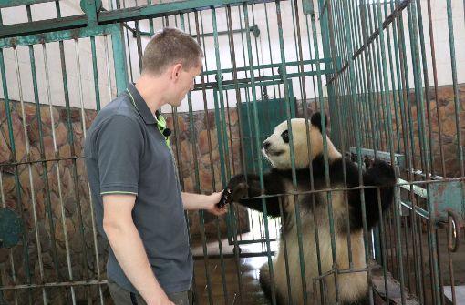 Sorgen Panda-Pornos für Baby-Bären?