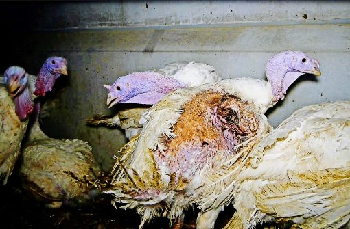 Tierschutzverein verklagt Veterinäramt