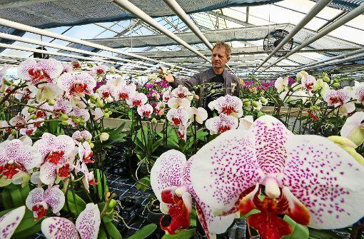 Wo Schönaichs Blüten blühen