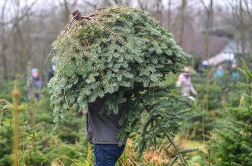 Der Weihnachtsbaum – alles eine Frage der Planung