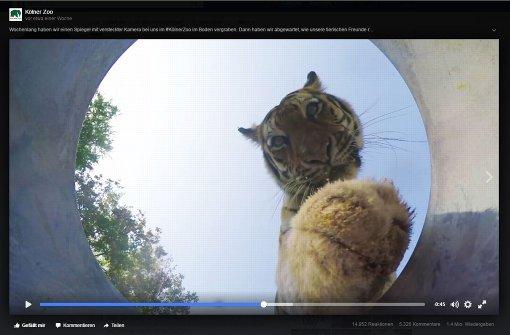 """Kölner Zoo spielt """"Versteckte Kamera"""""""