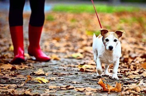 Hundekot auf Wegen kostet 75 Euro