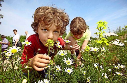 Wildblumen-Idee im Keim erstickt