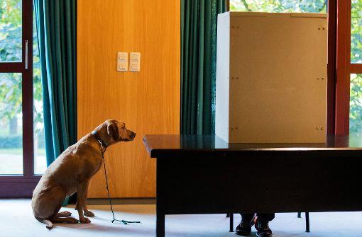Bundespräsident ruft Deutsche zur Wahl auf