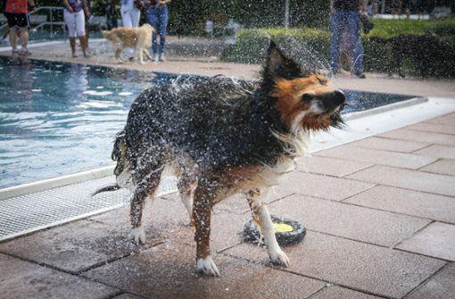 Wenn Vierbeiner baden gehen