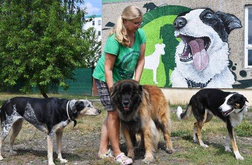 Innerhalb eines Jahres hatte Vollrath 25 Hunde gleichzeitig in Betreuung - mehr Tiere darf sie wegen einer Lärm-Auflage der Stadt nicht aufnehmen. Foto: dpa
