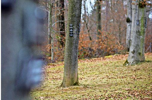 Begehrte  letzte Ruhe unterm Baum