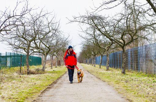 Tierschutzbeauftragte fordert Hundeführerschein