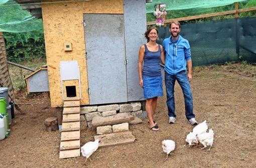 Zerrupfte Hühner wecken Mitleid