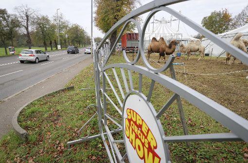 Circus Althoff muss Grundstück räumen