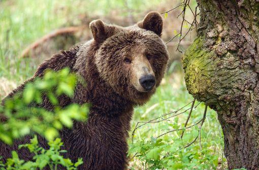 Balsam für geschundene Bären