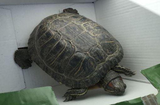 Wasserschildkröte sucht ihren Besitzer
