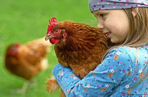 Jeder kann Hühner bei sich aufnehmen
