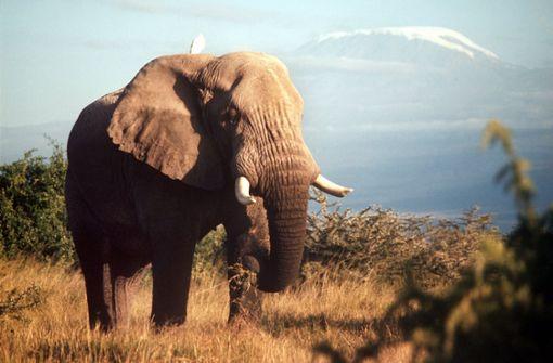 Elefanten trampeln zwei Menschen zu Tode