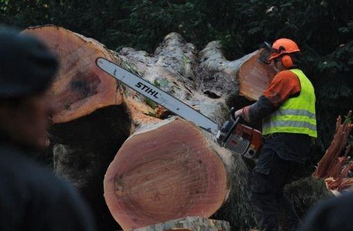 In der Nacht zum 1. Oktober waren unter massiven Protesten im Stuttgarter Schlossgarten 25 Bäume gefällt worden. Foto: dpa
