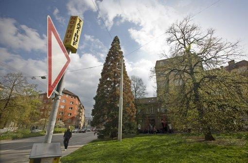 CDU fordert Weihnachtsbaum
