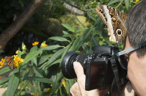 Die Neuankömmlinge ziehen Hobbyfotografen und Schmetterlingsliebhaber gleichermaßen an. Foto: dpa