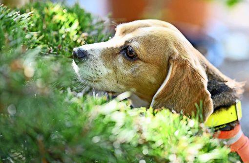 Auch Spührhunde waren auf der Suche nach dem kleinen Jungen. Foto: dpa